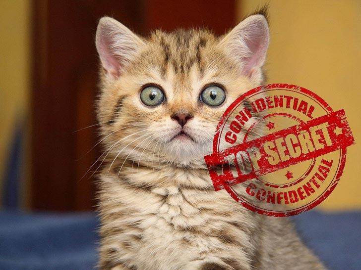 Секретный кот